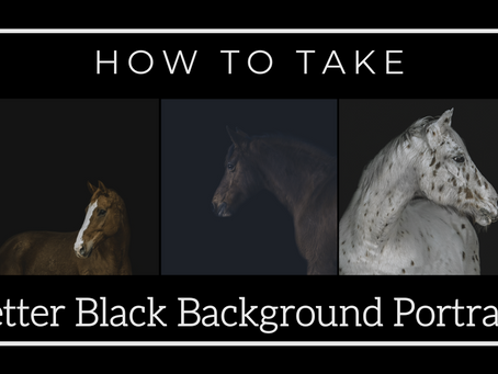How To Take Black Backgrounds  | Horse Photography Tutorial