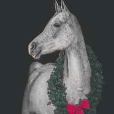 Christmas Horse Portrait