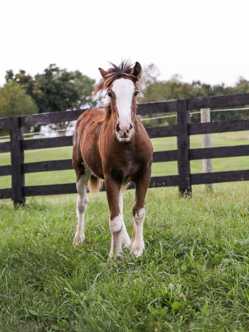 brown-and-white-horse-standing-on-green-