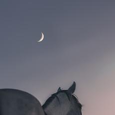 Moonchild AQHA Horse and moon print