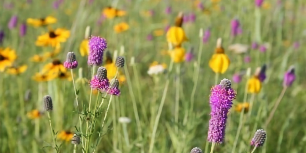 Native Plant and Seed Sale with Olmsted SWCD
