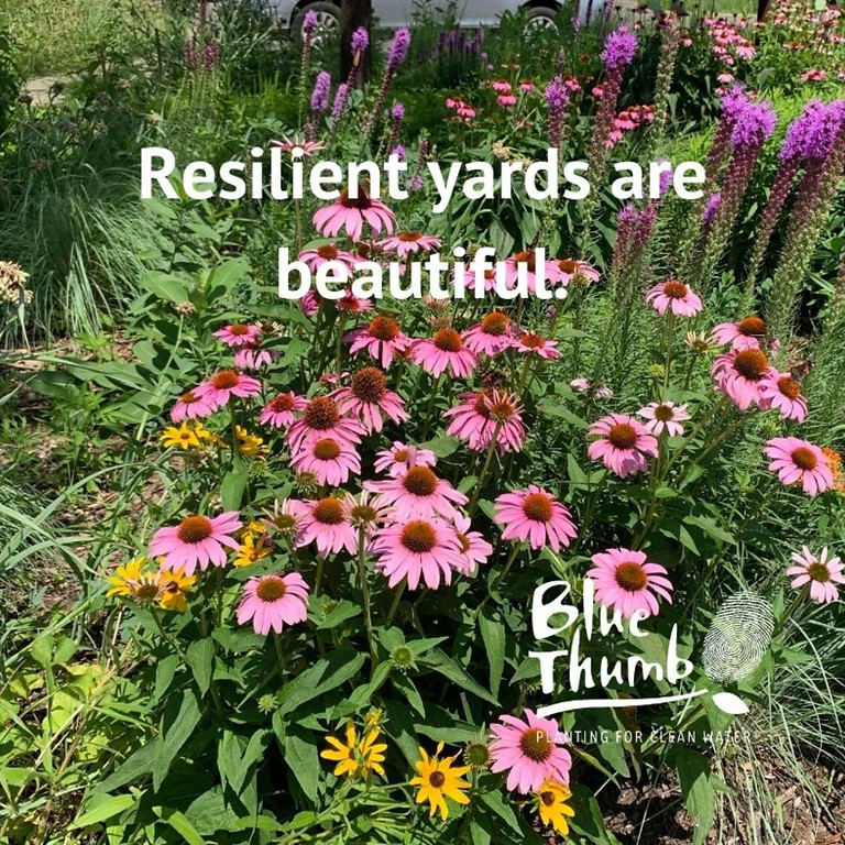 Resilient Yards