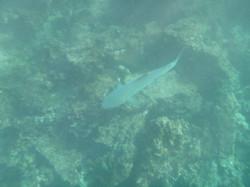 10-27-14 Rebida Island Water cam pics (51)