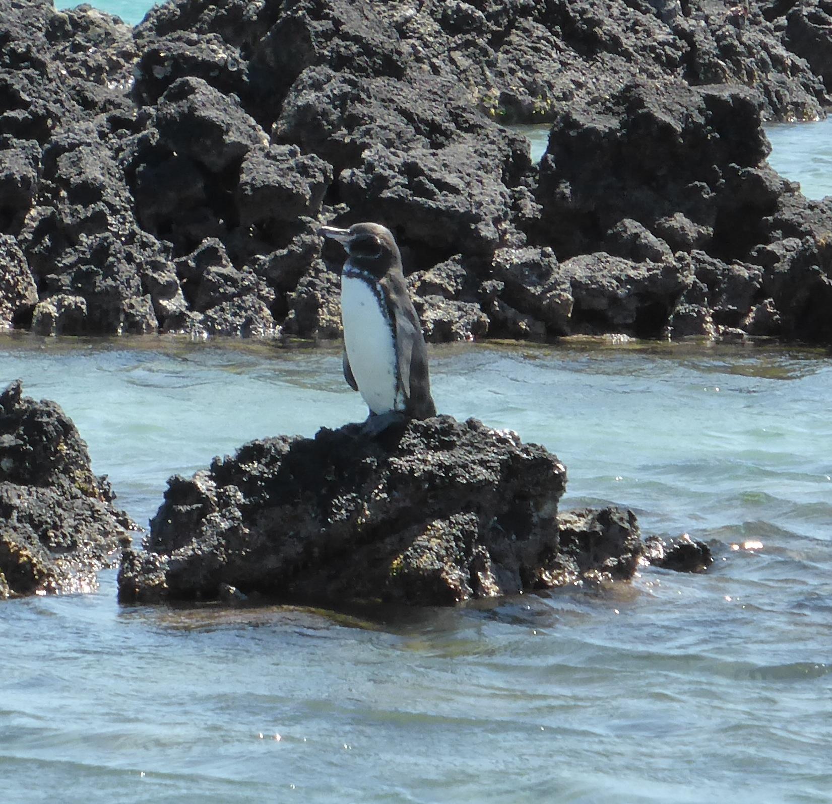 10-28-14 Elizabeth Bay, Isabela Island (94)