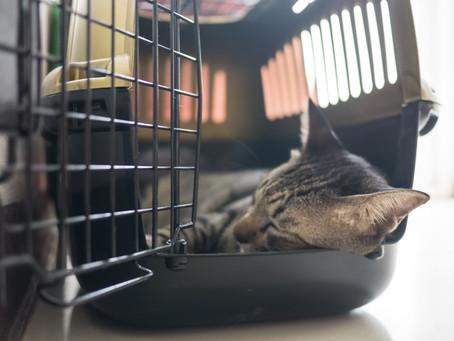 Tips til katter som er engstelige for å reise