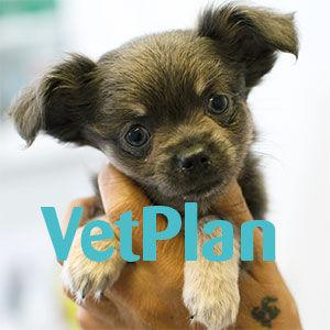 Vet plan Hund basis