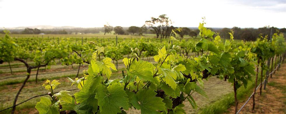 RPL Wines June 2020 Wix_PW_L3336 - Versi