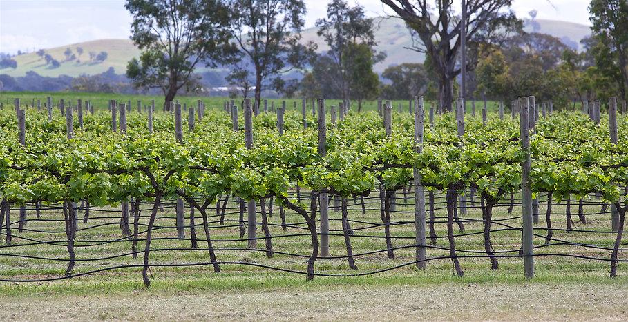 RPL Wines June 2020 Wix_PW_L3178 - Versi