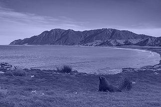 White Rock & Seal mono blue.jpg