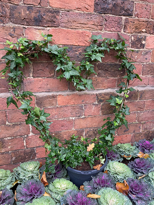 Ivy Heart (Large)