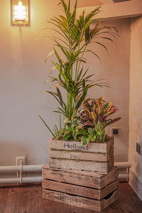 Bespoke Houseplant Crates