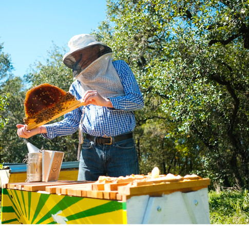 TopBar Beekeeping