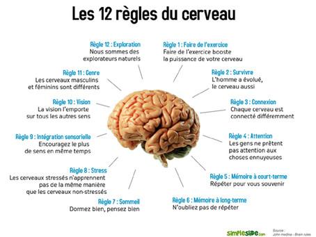 Comment fonctionne notre cerveau, et comment en tirer parti ?