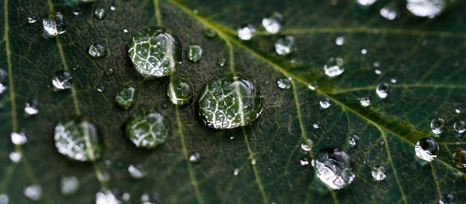 Water-based Skin Care