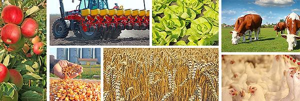 farm_image2.jpg