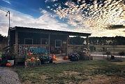 The veggie shack.jpg