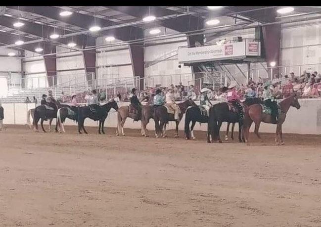multiple horses.jpg
