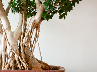 The Shala Bonsai