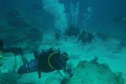 Checkout dives