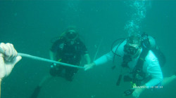 coming up from a dive