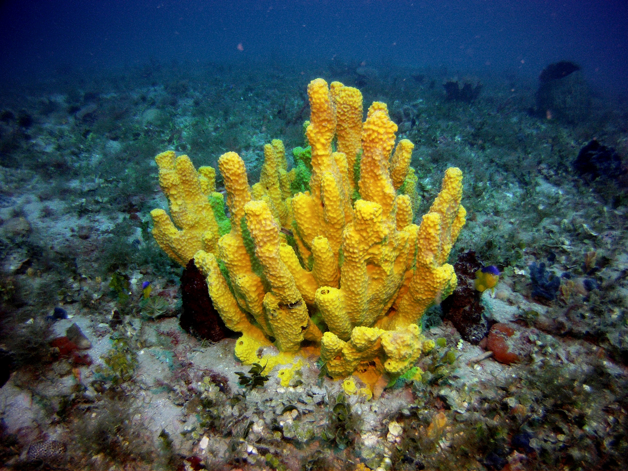 Coral Head found in Gulf