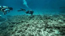 scuba class check out dives