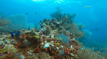 Florida Reef System, why its important to care.