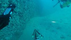 Charlies Reef
