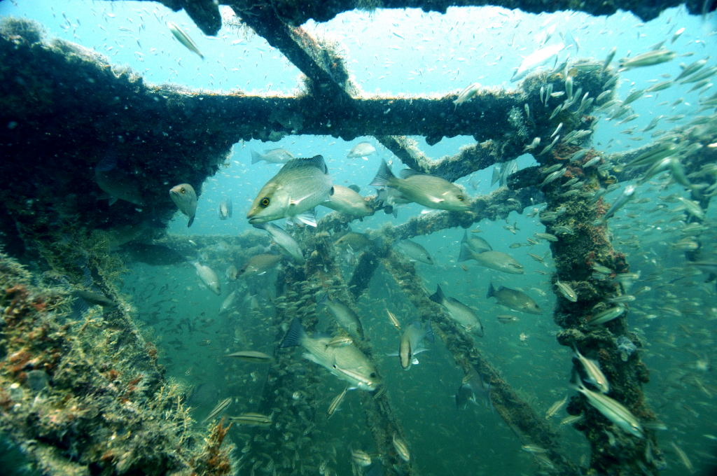 Arc Reef