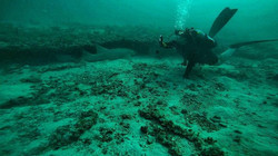 friendly shark likes scuba divers