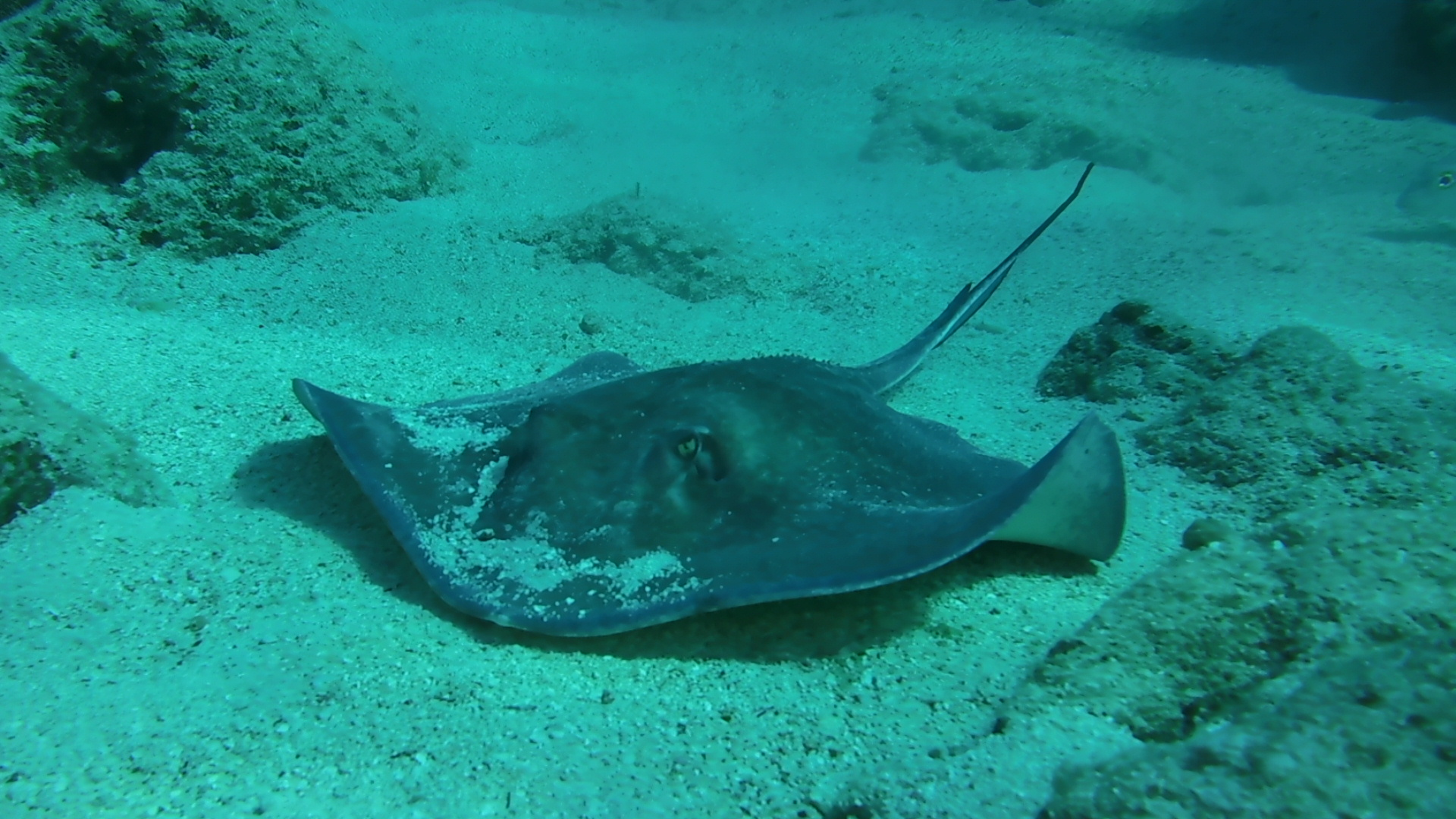 Stingray Key Largo