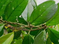 8 manieren waarop ( indoor) planten jouw algehele gezondheid verbeteren.