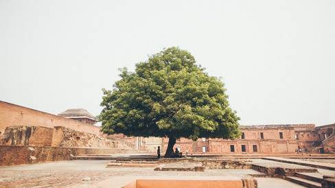 Jaypur