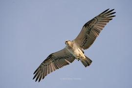 Osprey_45_3.jpg