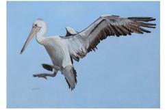 pelican_art_01_3.jpg