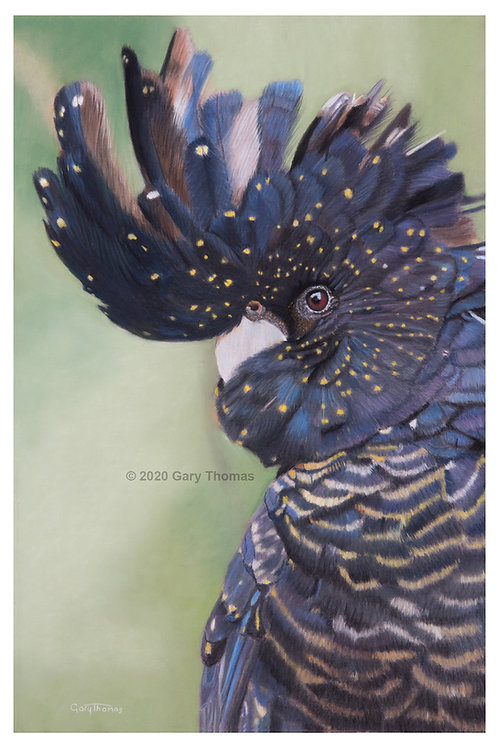 SOLD - Black Cockatoo Pastel