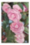 flowers_1495_web.jpg