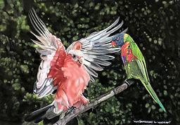 Parrots web (002).jpg