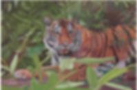 tiger_0510_web.jpg
