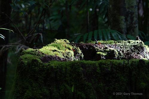 Rainforest_01_3.jpg