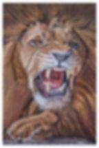 lion2_6278_web.jpg
