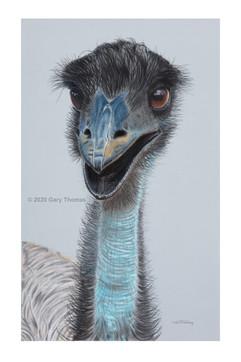Happy_Emu_3.jpg