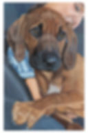 puppy_9156_web.jpg