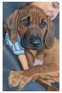 Gary Thomas | Custom Pet Portraits | Whozart Portraits | Brisbane, Queensland, Australia