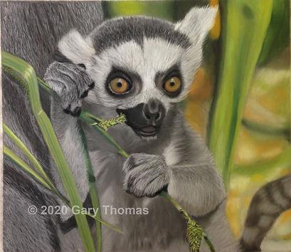 Lemur_01_3.jpg