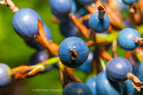 Blue_Marble_Tree_11_M_3.jpg