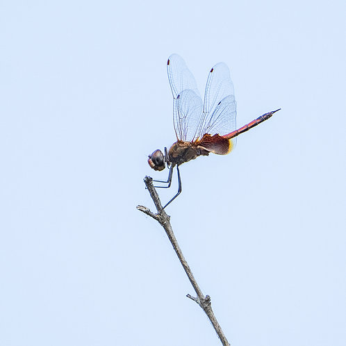 Dragon_Fly_02_2.jpg