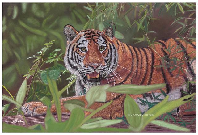 Siberian_Tiger_3.jpg