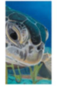 turtle_2836_web.jpg