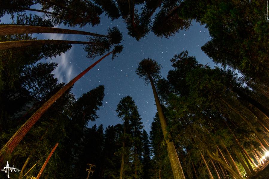 California - Woods